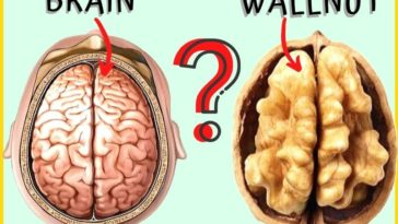 why should you eat walnuts everyday