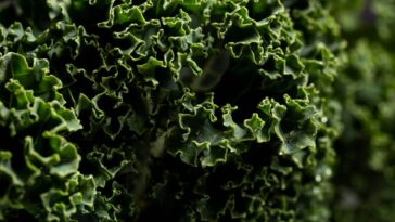 Kale Health Benefits Nutrition Facts Properties and Kale Recipes