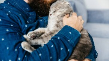 Earning a Cats Love is Not Easy We Cracked The 5 Codes For You