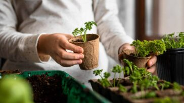 Low Waste Living Grow These 7 Vegetables From Leftovers