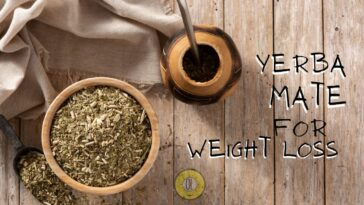 Yerba Mate For Weight Loss Benefits Side Effects Recipes